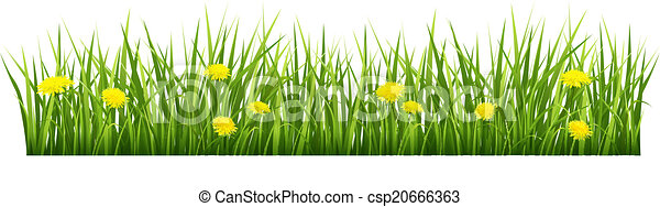 Grass with yellow flowers - csp20666363