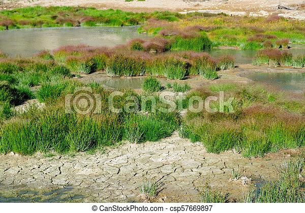 Grasses near Mud volcano - csp57669897
