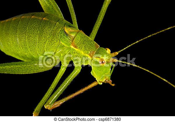 Grasshopper 2 - csp6871380