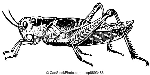 Line Art Xl 2012 : Grasshopper half face isolated on white background clip art vector