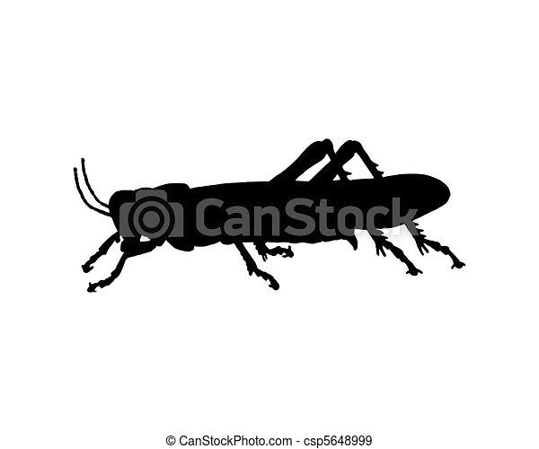 Grasshopper - csp5648999