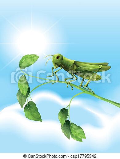 Grasshopper - csp17795342
