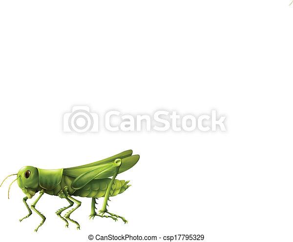 Grasshopper - csp17795329