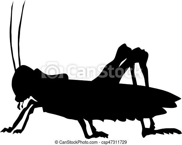 grasshopper - csp47311729