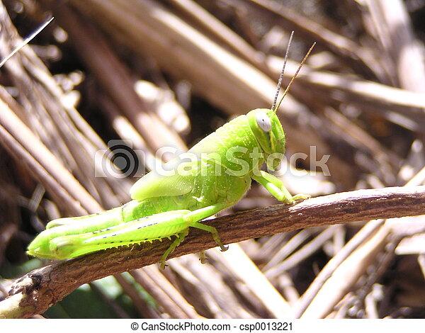 Grasshopper - csp0013221