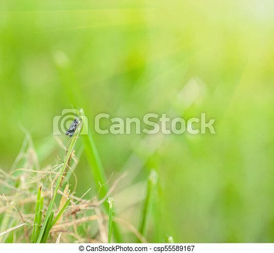 grass blade close up. Grasshopper Sitting On Grass - Csp55589167 Blade Close Up