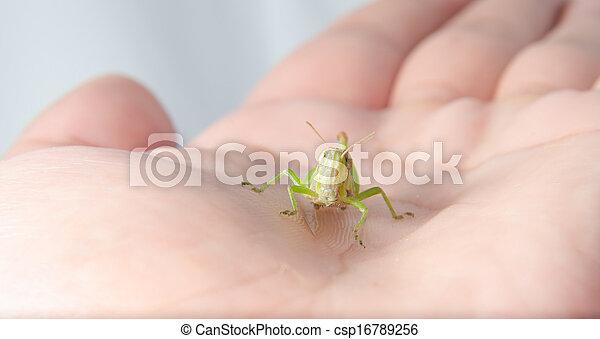 Grasshopper - csp16789256