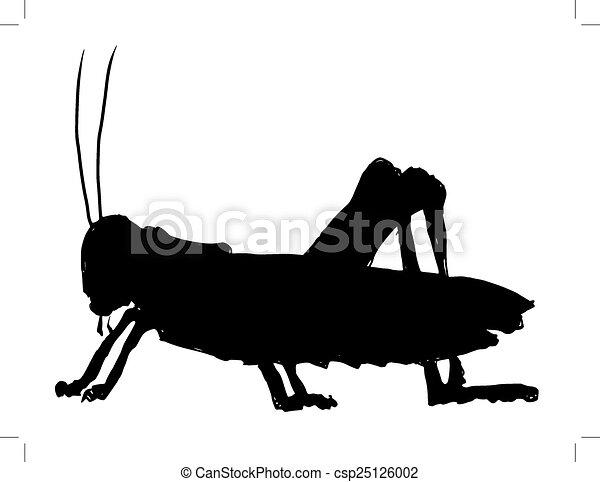 grasshopper - csp25126002