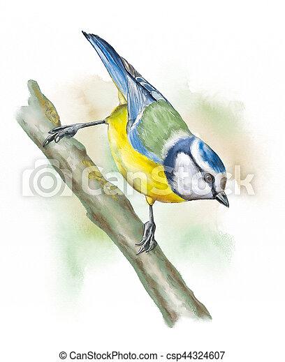 Grassland birds, blue tit - csp44324607