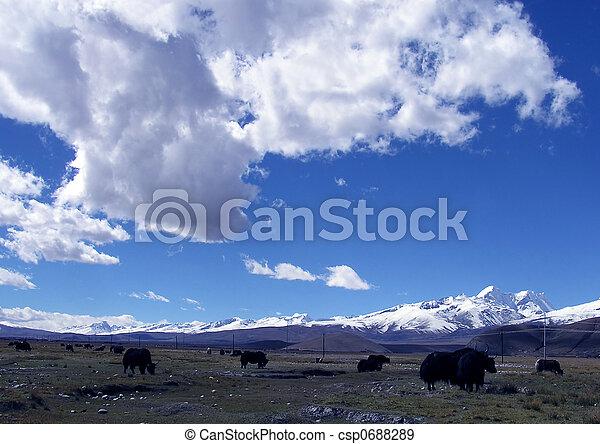Grassland - csp0688289