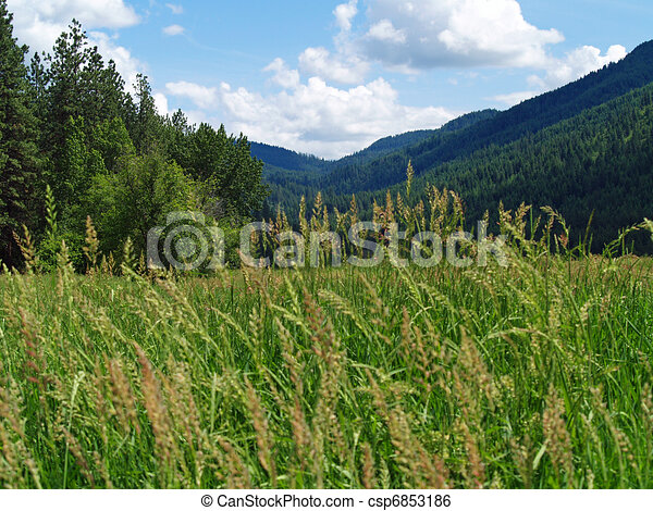 Grassy field with mountains and a partly cloudy blue sky in stock grassy field with mountains and a partly cloudy blue sky in background csp6853186 voltagebd Images