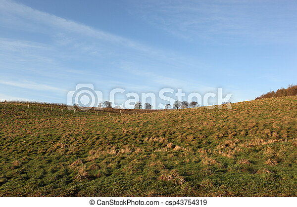 Grassy meadow and winter trees - csp43754319