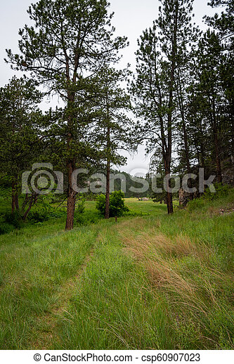 Grassy Trail Through Trees in Canyon - csp60907023