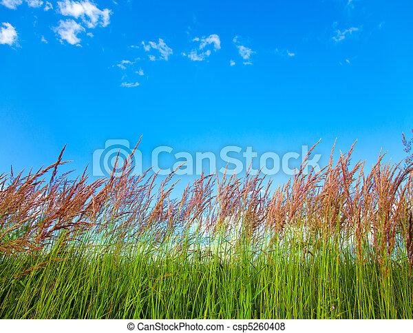 Grassy View - csp5260408
