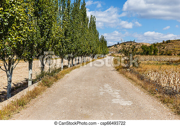 gravel road along a corn field with trees along the road - csp66493722