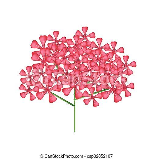Graveolens rose geranie rote blumen oder pelargonium vektor graveolens rose geranie rote blumen oder pelargonium bndel csp32852107 thecheapjerseys Images