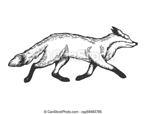gravure, renard, illustration, courant, vecteur, animal - csp59483785