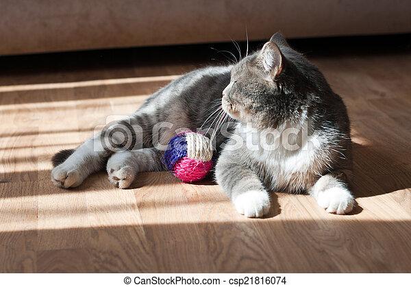 gray cat - csp21816074