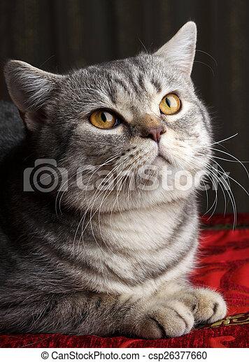 gray cat - csp26377660