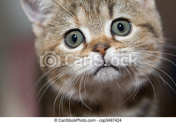 Gray cat - csp3497424