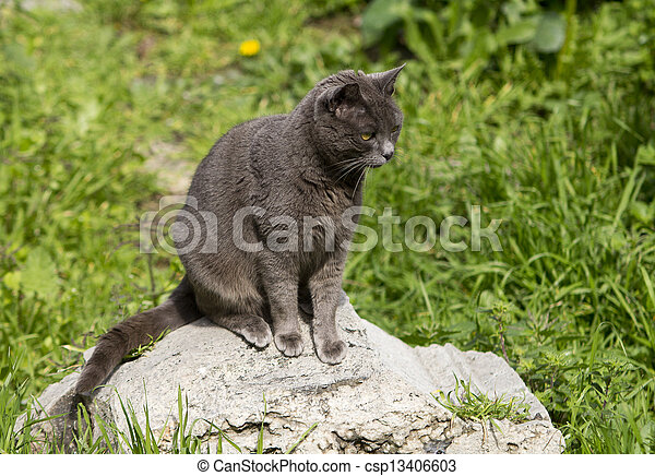 gray cat - csp13406603