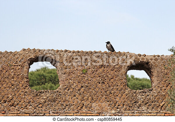gray crow over ancient Roman Ruins - csp80859445