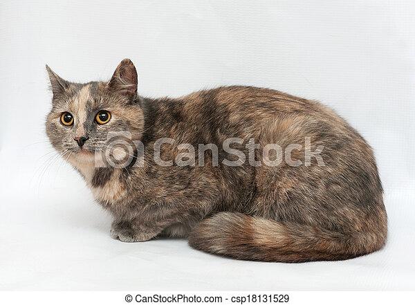 Grey Cat Wearing Blue Bow