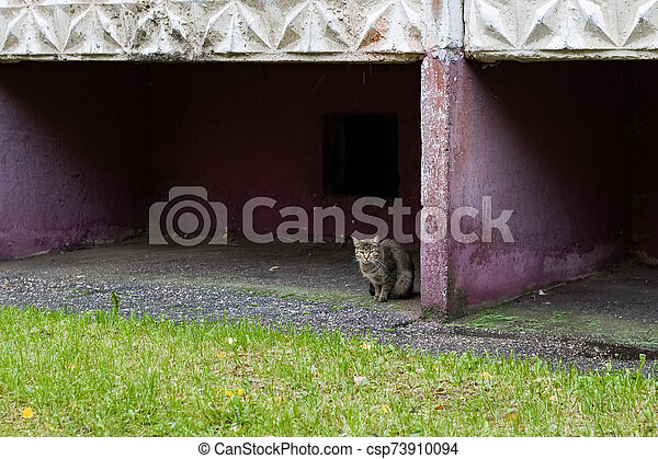Gray scared tabby cat sits at the corner - csp73910094