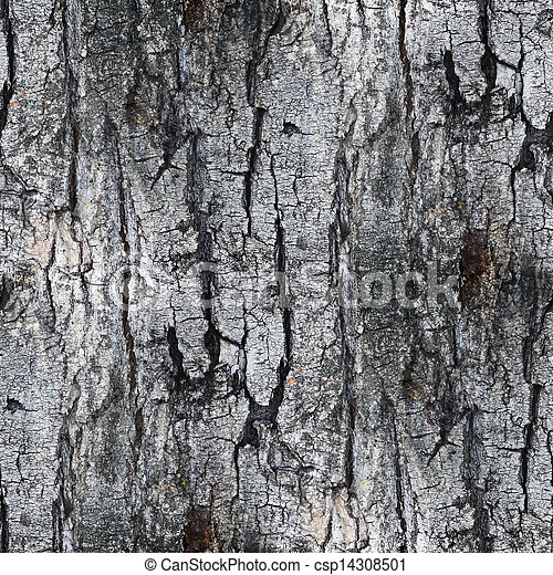 Gray Seamless Texture White Tree Bark Wallpaper Background Your