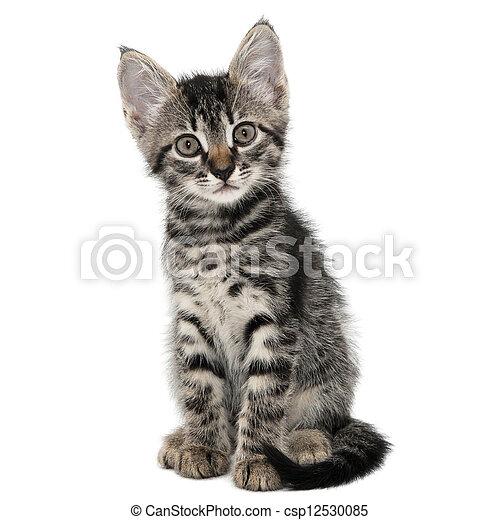 kitten pics Strip