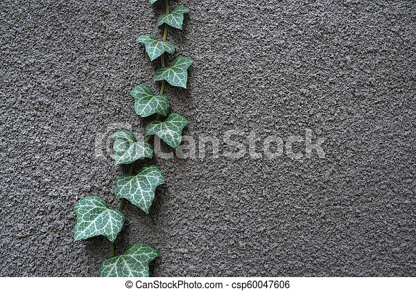 Gray wall with ivy - csp60047606
