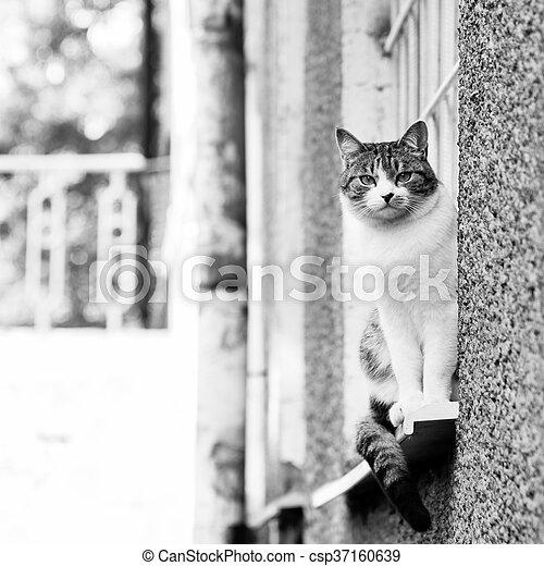 Gray-white cat near the house - csp37160639