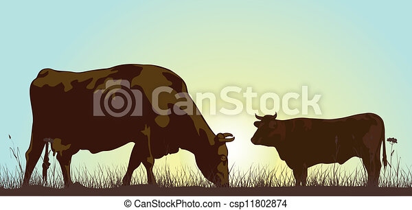 grazing cattle in the morning - csp11802874