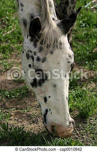 Grazing Horse - csp0010842