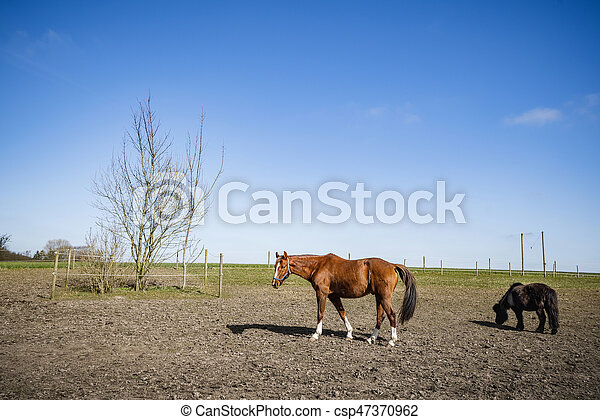 Grazing horses on a field at a farm - csp47370962