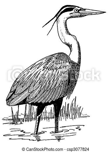 Great Blue Heron - csp3077824