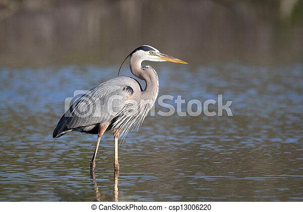 Great Blue Heron - Fort Myers Beach, Florida - csp13006220