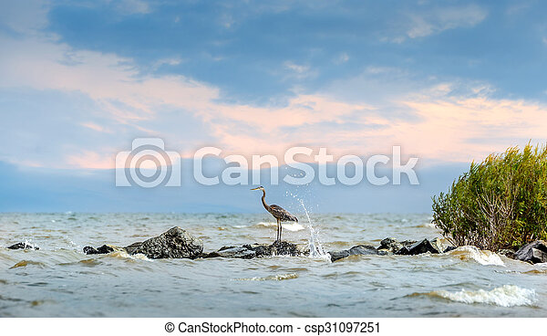 Great Blue Heron standing on jetty with water splashing - csp31097251