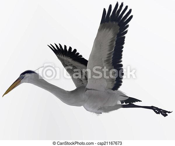 Great Blue Heron - csp21167673