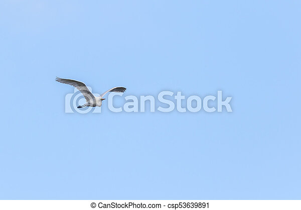 Great egret (Casmerodius alba) - csp53639891