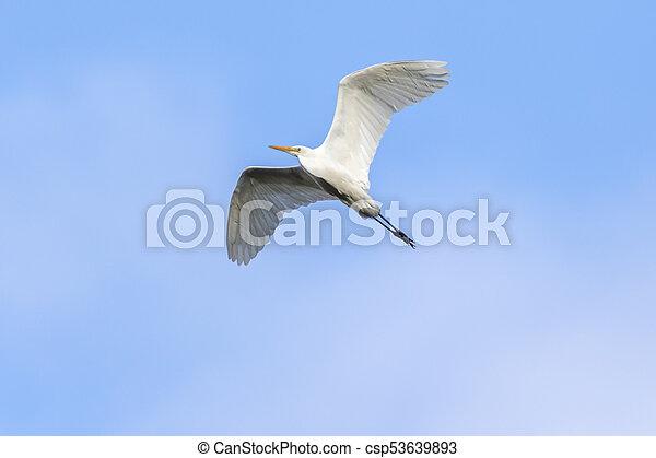Great egret (Casmerodius alba) - csp53639893