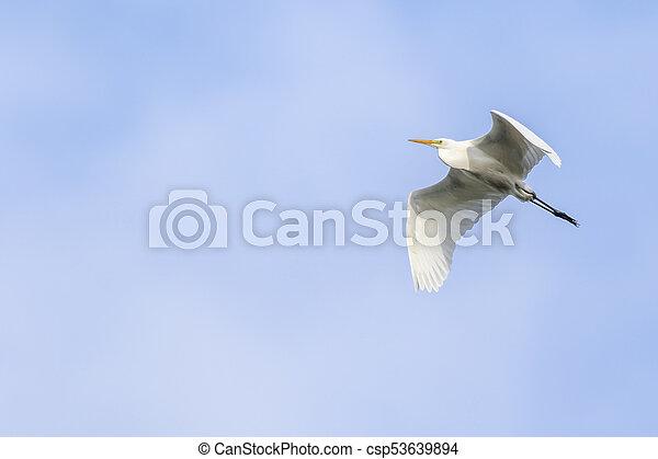 Great egret (Casmerodius alba) - csp53639894