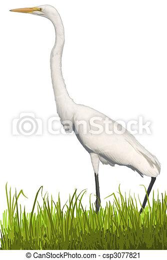 Great Egret - csp3077821