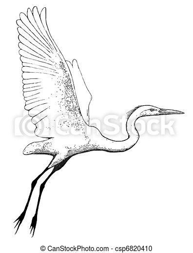 Great Egret flying - csp6820410