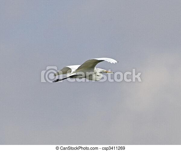 Great Egret - csp3411269