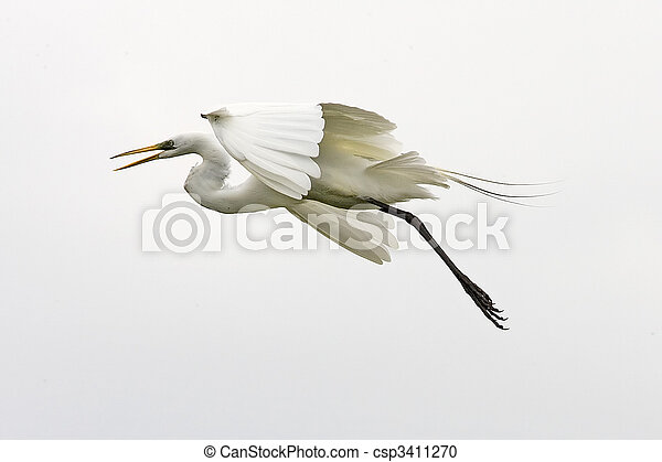 Great Egret - csp3411270
