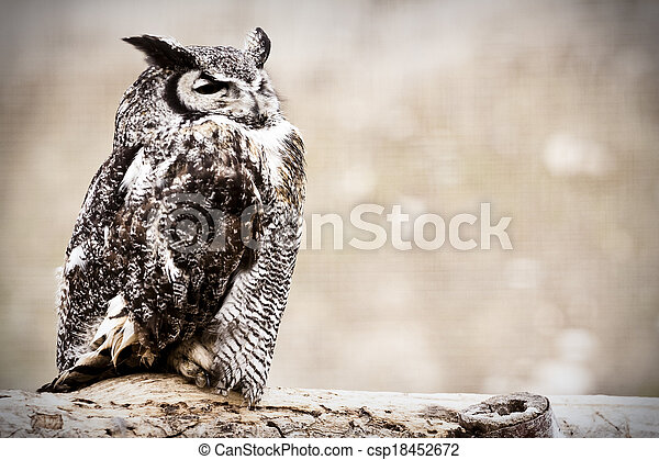 Great Horned Owl - csp18452672