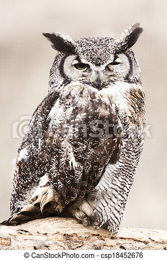 Great Horned Owl - csp18452676