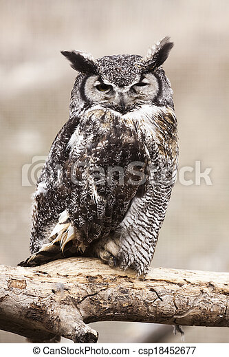 Great Horned Owl - csp18452677