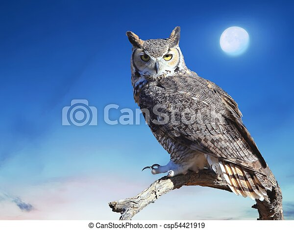 Great Horned Owl - csp54421919